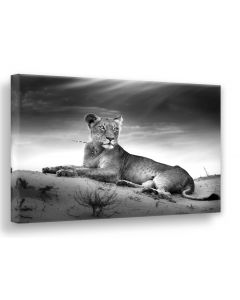 Tavla Canvas 75x100 Lioness