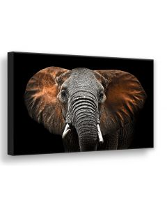 Tavla Canvas Silver 75x100 Red Elephant