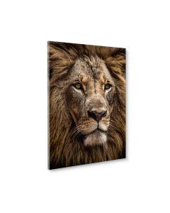 Tavla Canvas 50x70 Majestic Lion
