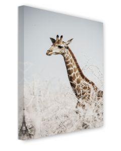 Tavla Canvas 50x70 Giraffe