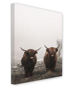 Tavla Canvas 50x70 Highland cows