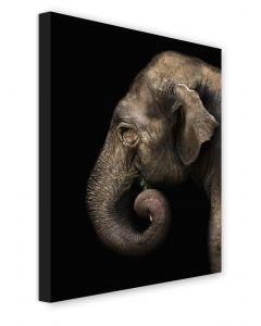 Tavla Canvas 50x70 Elephant