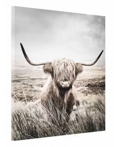 Tavla Canvas 75x100 Highland Cattle