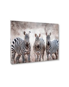 Tavla Canvas 75x100 Zebras