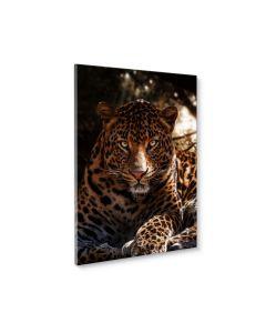 Tavla Canvas 50x70 Leopard