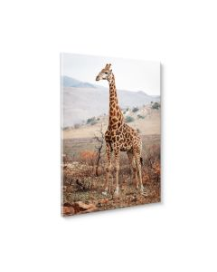 Tavla Canvas 50x70 Giraffe in the wild