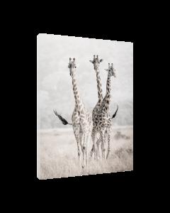 Tavla Canvas 30x40 Nature Giraffes