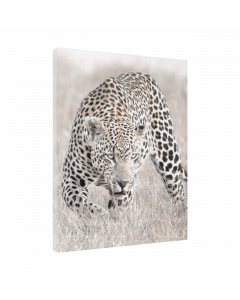 Tavla Canvas 30x40 Nature Leopard