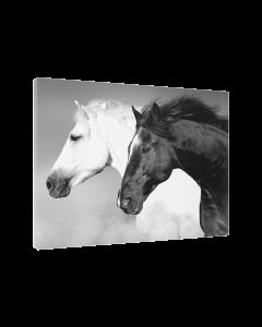 Tavla Canvas 75x100 Horse Black & White