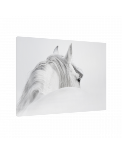 Tavla Canvas 75x100 Horse White