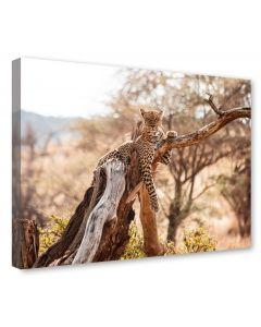 Tavla Canvas 75x100 Gepard