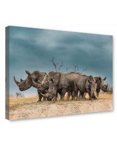 Tavla Canvas 75x100 Noshörningar