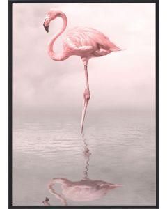 Poster 30x40 Pink Flamingo 1 (planpackad)