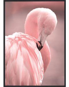 Poster 30x40 Pink Flamingo 3 (planpackad)