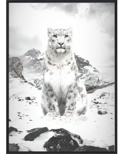 Poster 30x40 B&W White Lynx (planpackad)