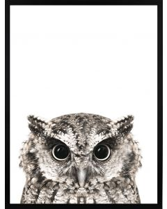 Poster 30x40 Nature Horned Owl (planpackad)