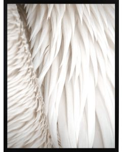 Poster 30x40 Nature White Feathers (planpackad)