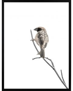 Poster 30x40 Nature Bird (planpackad)