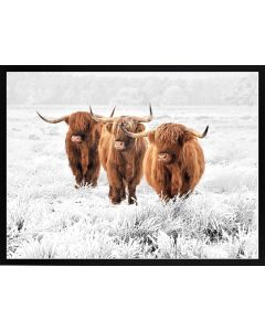 Poster 30x40 Nature Highland Cows (planpackad)