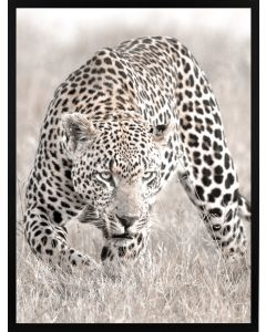 Poster 30x40 Nature Leopard