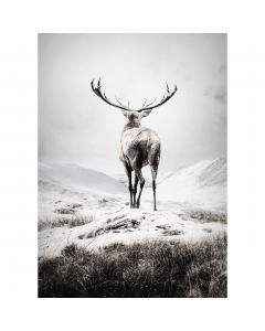 Poster 30x40 Nature Deer (planpackad)