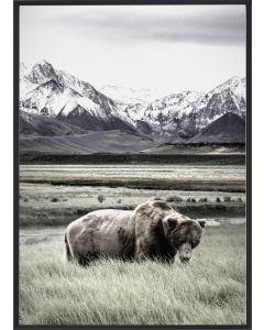 Poster 30x40 Nature Bear (planpackad)