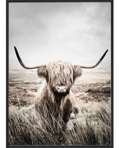 Poster 30x40 Nature Highland Cattle (planpackad)