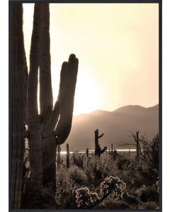 Poster 30x40 Desert Cactus (Planpackad)