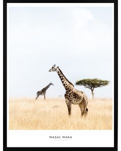 Poster 30x40 Masai Mara Giraffe (Planpackad)