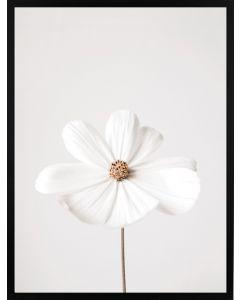 Poster 30x40 Nature White Flower