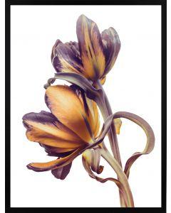 Poster 30x40 Spring Flower Orange