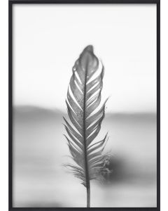 Poster 50x70 B&W Feather (Planpackad)