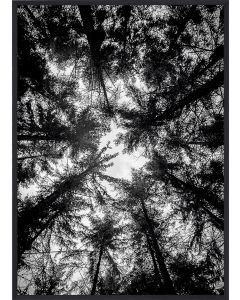 Poster 42x59,4 A2 The Treetops