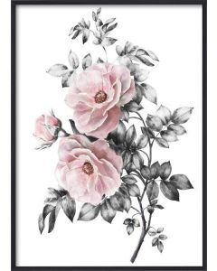 Poster 30x40 Pink Flower (planpackad)