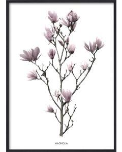 Poster 30x40 Pink Magnolia (planpackad)