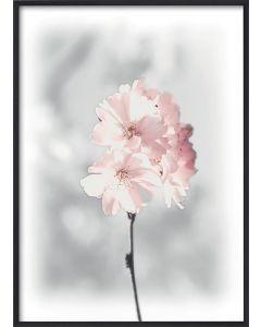 Poster 30x40 Pink Cherry Twig (planpackad)